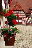 Decoração do pátio com flores Kaiserburg, foto de stock