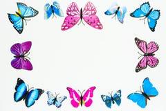 Decoração do quadro da borboleta no fundo branco Fotos de Stock Royalty Free