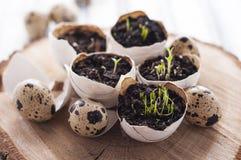 Decoração do shell de ovo da páscoa Foto de Stock Royalty Free