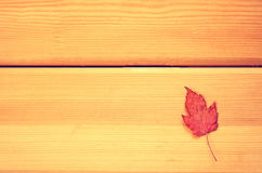 Decoração do tempo do outono, folhas de bordo secas fixadas na corda com pino de roupa, filtro de madeira do instagram do context Imagem de Stock