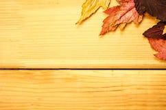 Decoração do tempo do outono, pinnedrope seco das folhas de bordo com pino de roupa, contexto de madeira Imagem de Stock Royalty Free