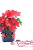 Decoração dos Poinsettias imagem de stock royalty free