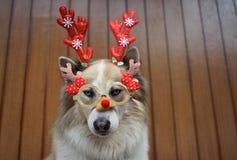 Decoração engraçada do Natal na cabeça de cão mixbreed foto de stock