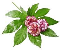 Decoração floral foto de stock royalty free