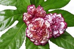 Decoração floral fotos de stock royalty free