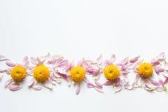 Decoração floral Fotografia de Stock Royalty Free