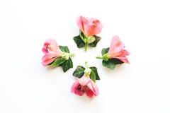 Decoração floral no fundo branco Imagens de Stock Royalty Free