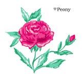 Decoração floral tirada mão Fotos de Stock Royalty Free