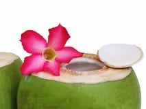 Decoração fresca da bebida do coco com as flores no fundo branco Fotografia de Stock Royalty Free