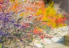 decoração a grama macia colorida é pintada em um diferente Imagens de Stock Royalty Free