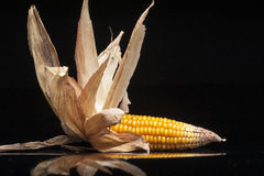 Decoração, milho, espiga, amarelo, ainda vida, eleganc Fotos de Stock Royalty Free