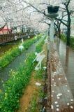 Decoração na ponte romance do córrego de Yeojwacheon durante a estação de mola no festival de Jinhae Gunhangje, Jinhae, Coreia do Fotografia de Stock