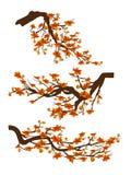 A decoração ramifica com flores, fundo branco isolado sakura da flor da mola Ano novo chinês ilustração royalty free