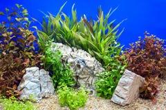 Decoração subaquática no vidro foto de stock royalty free