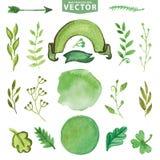 Decoração verde da aquarela, ramos Floral, grupo da pétala ilustração royalty free