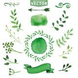Decoração verde da aquarela, ramos Jogo floral ilustração do vetor