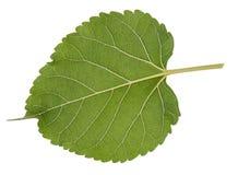 Decoração verde do macro da folha da folha Imagem de Stock Royalty Free