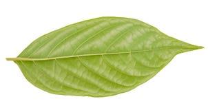 Decoração verde do macro da folha da folha Fotos de Stock Royalty Free