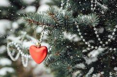 Decoração vermelha do Natal do coração no ramo de árvore Fotos de Stock