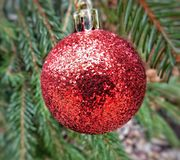 Decoração vermelha muito agradável do brilho na árvore de Natal imagens de stock