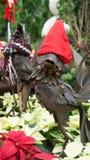 Decorações ao ar livre do Natal Imagens de Stock Royalty Free
