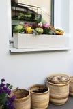 Decorações de Dia das Bruxas com abóbora e lote das flores Imagens de Stock
