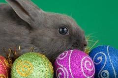 Decorações do coelho e do Natal fotografia de stock royalty free