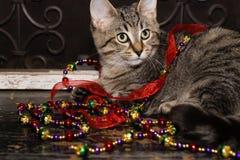 Decorações do gatinho e do feriado Imagens de Stock
