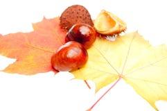 Decorações do outono fotos de stock