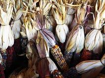 Decorações do tempo de colheita Foto de Stock