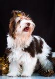 Decorações do yorkshire terrier e do Natal de Biewer Foto de Stock Royalty Free