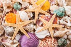 Decorações dos shell e das estrelas do mar do mar, fim acima Imagem de Stock