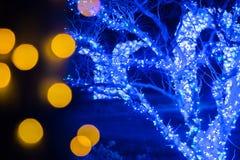 Decorações e luzes da estação do Natal em jardins Fotos de Stock Royalty Free
