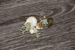 Decorações e shell Imagem de Stock
