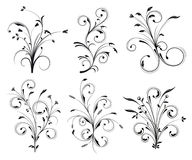 Decorações florais Fotografia de Stock