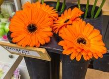 Decorações florais bonitas Fotografia de Stock Royalty Free