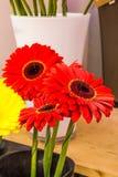 Decorações florais bonitas Fotos de Stock