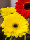 Decorações florais bonitas Imagens de Stock Royalty Free