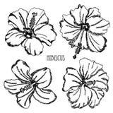 Decorações florais tiradas mão ilustração royalty free