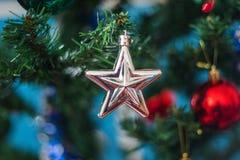 Decoración blanca de la estrella de la Navidad en un árbol de pino verde con vagos rojos Fotografía de archivo
