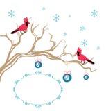 Decoración cardinal del brunch del pájaro de la Navidad Imagenes de archivo