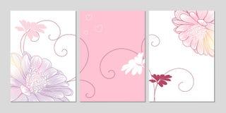 Decoración casera Sistema del arte de la decoración de la pared de fondos con la margarita de la flor Elementos florales para el  Imagen de archivo libre de regalías