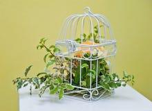 Decoración con la planta verde en una jaula de pájaros Imagenes de archivo