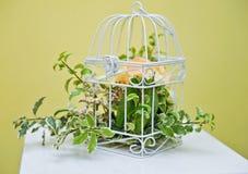 Decoración con la planta verde en una jaula de pájaros Fotos de archivo