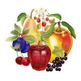 Decoración con las frutas realistas Fotos de archivo libres de regalías