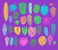 Decoración con las hojas tropicales Foto de archivo