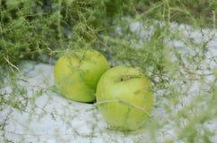 Decoración con las manzanas y el espárrago verdes en el fondo blanco Imagen de archivo libre de regalías
