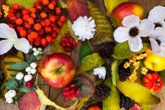 Decoración de la acción de gracias con las manzanas, las bayas de serbal y el sil blanco Fotografía de archivo