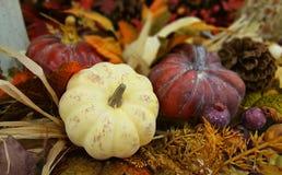 Decoración de la acción de gracias y de Halloween con tres calabazas Caída, otoño Fotos de archivo libres de regalías