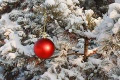 Decoración de la bola del árbol de navidad - almacene la foto Imagen de archivo